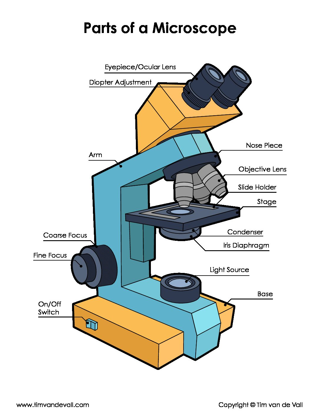 Cell Worksheet Microscope Biology