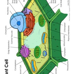 Plant Cell Diagram With Labels Multipolar Neuron Labeled - Tim's Printables