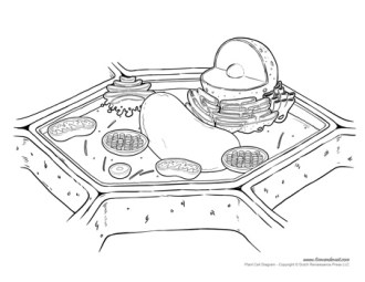 plant cell diagram not labeled
