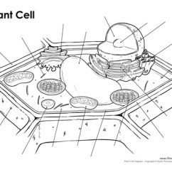 Blank Cell Diagram Worksheet 1993 Toyota Corolla Alternator Wiring Printable Plant Labeled Unlabeled And