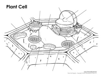 plant cell diagram unlabeled