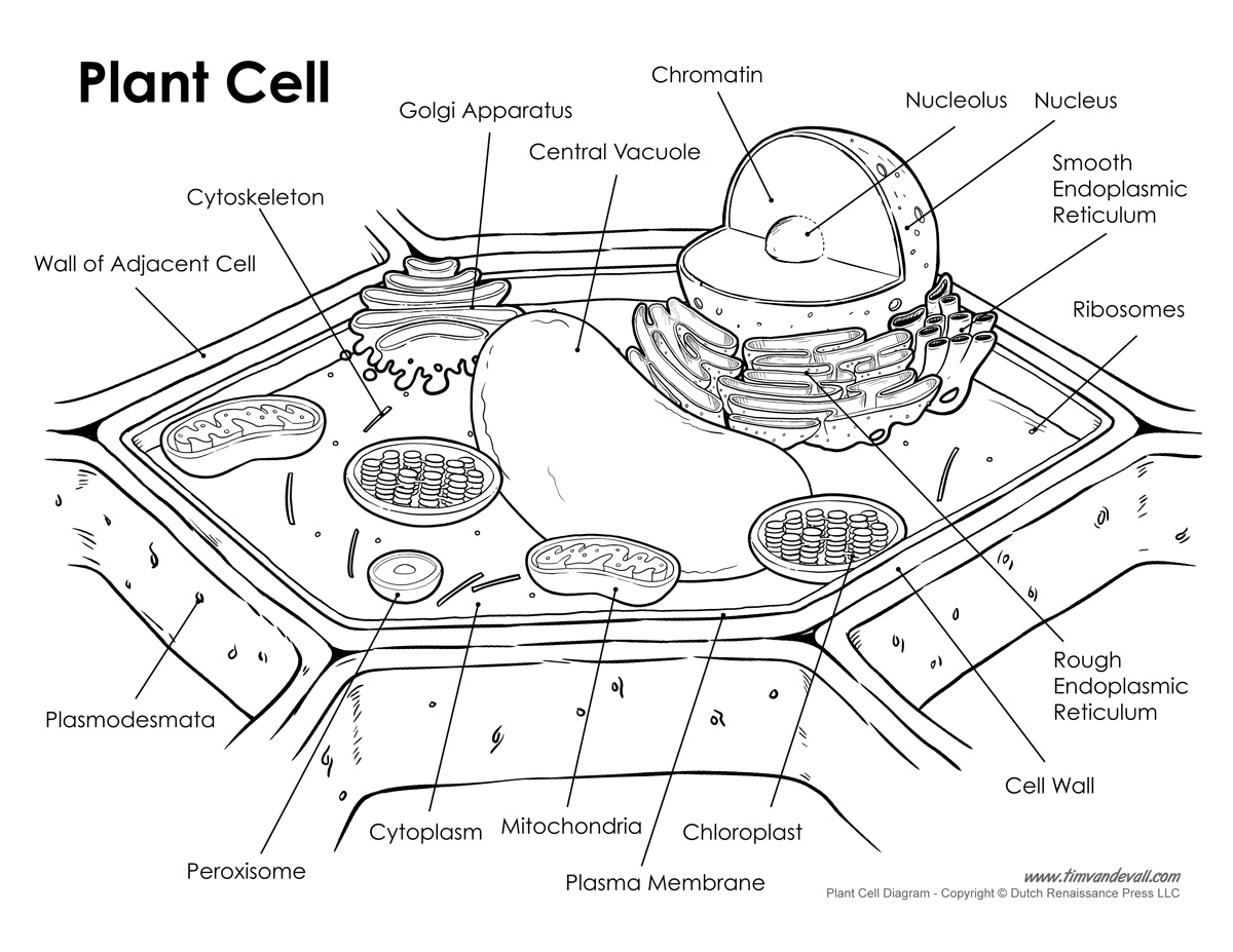 Plant Cell Diagram Labeled Worksheet