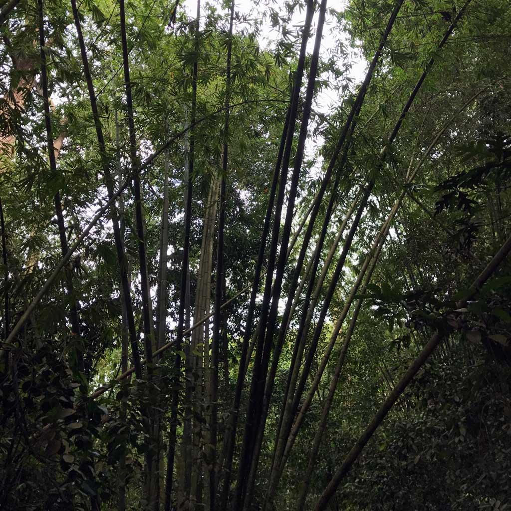 Singapore-MacRitchie-Park-04