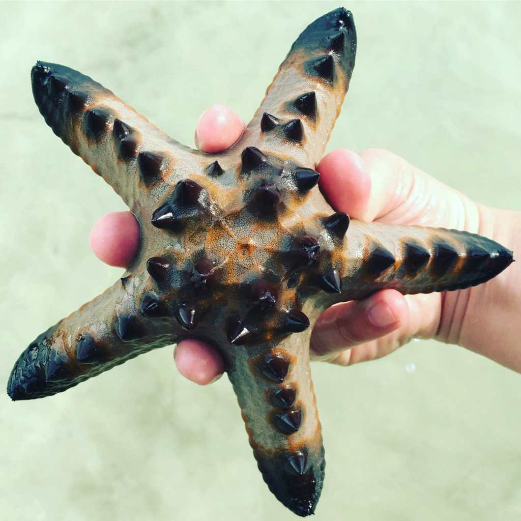 El-Nido-Corong-Corong-Starfish