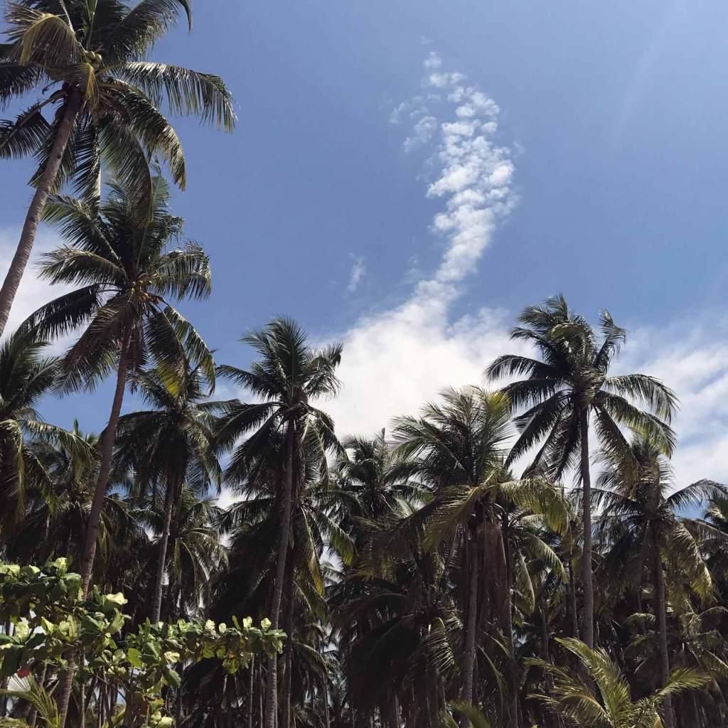 El-Nido-NacPan-Palmtrees