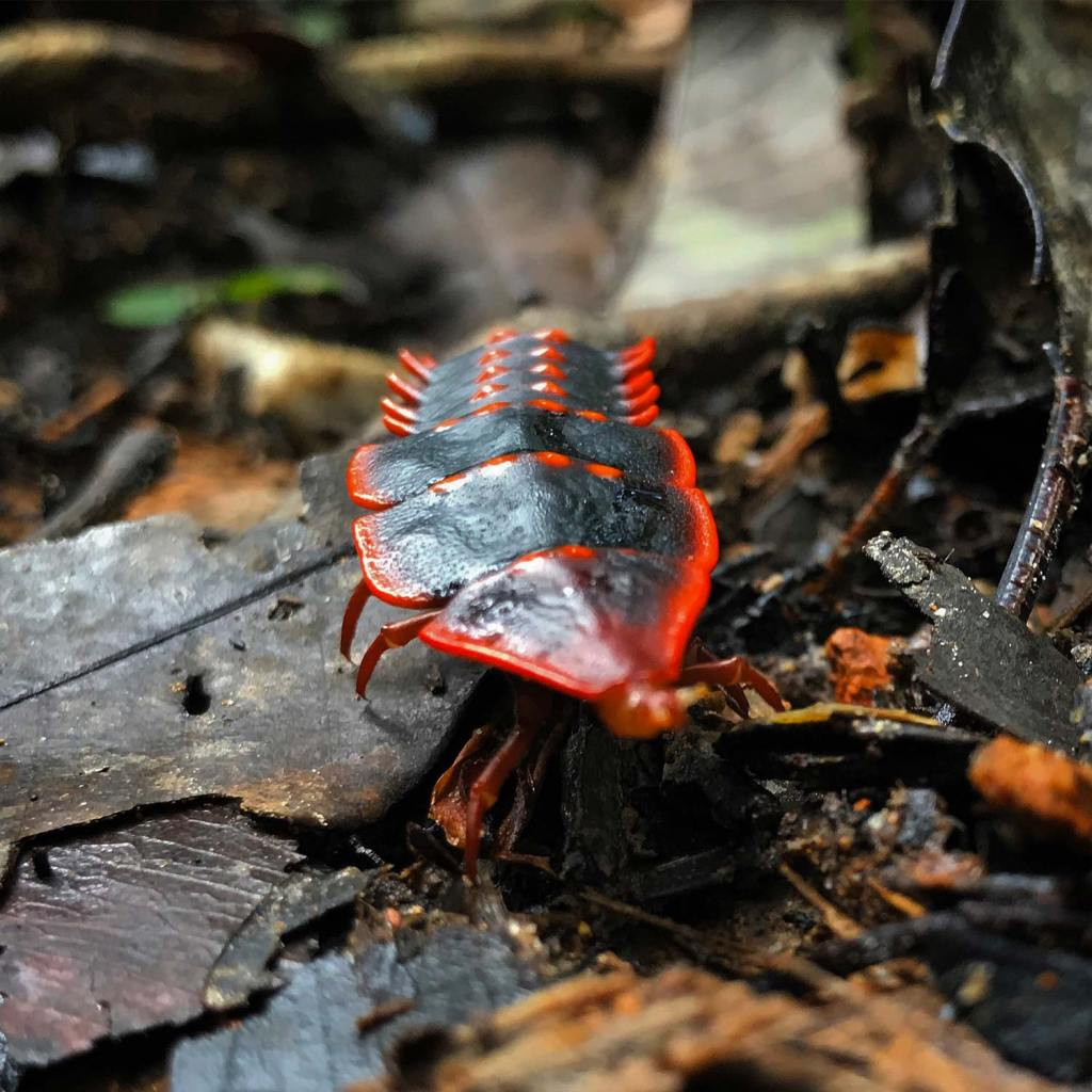 Kota-Kinabalu-Taman-Beetle-02