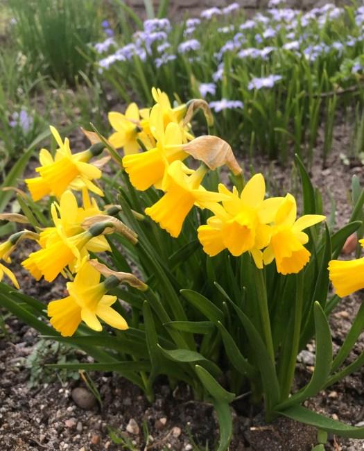 Vårbesök i Sverige
