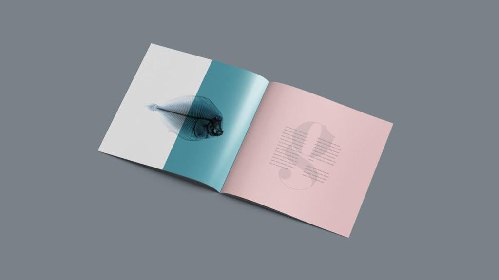 square brochure free psd mockup pixlov