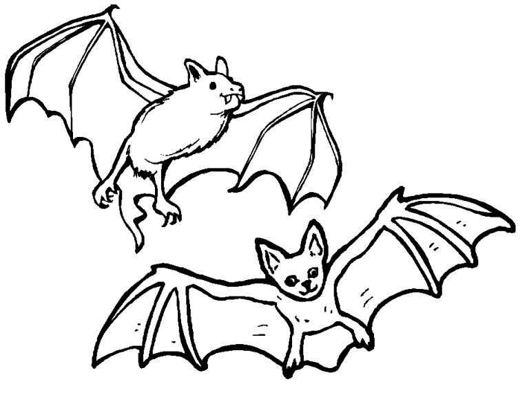 Bat Coloring Book