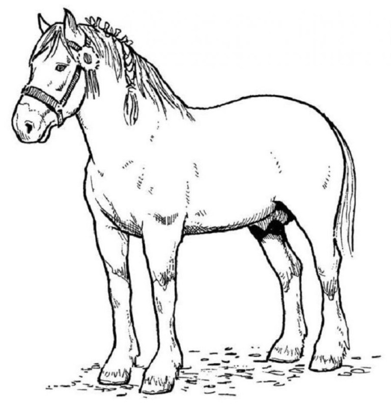 horse coloring pages the big