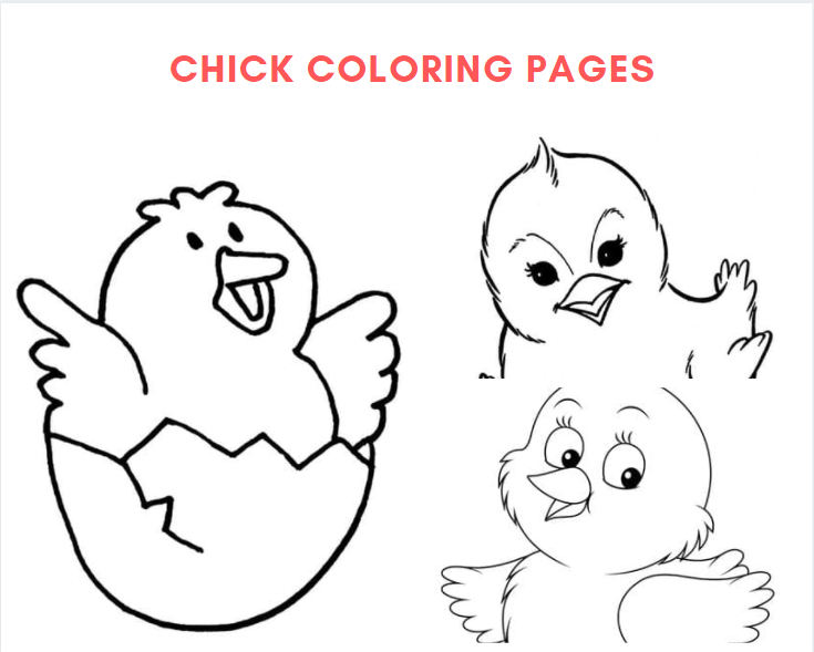 Chick Colouring