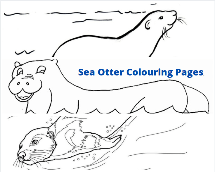 Sea Otter Colouring Pages