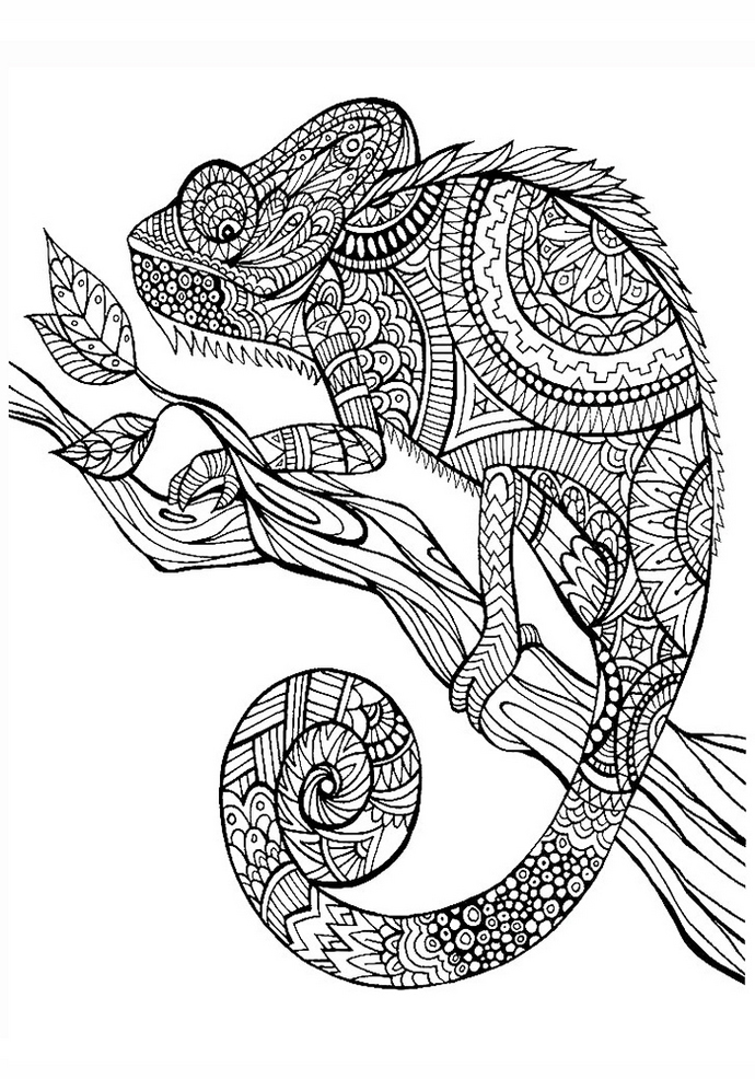animal mandala chameleon to education for boy