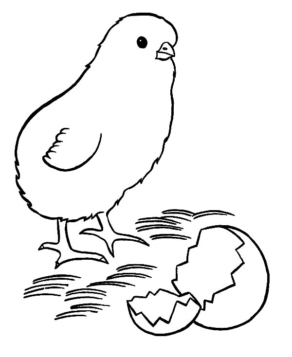 Baby Chick Printable