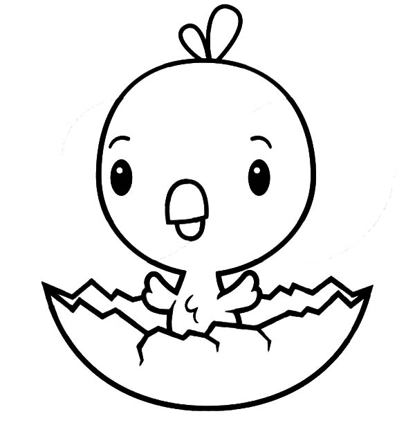 cute Chick for kids