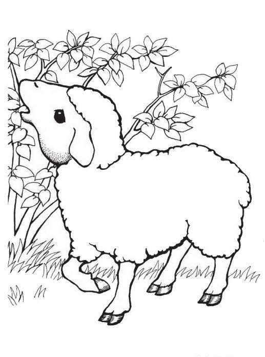 lamb coloring book to printable