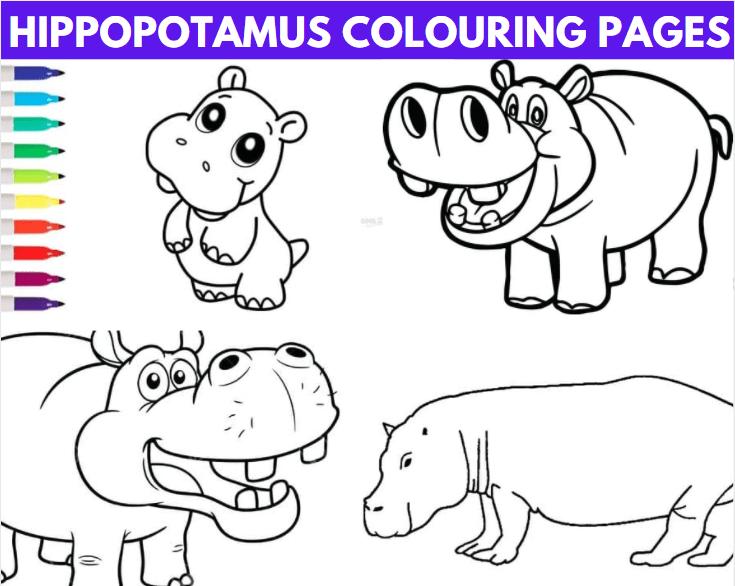 Hippopotamus Colouring Pages