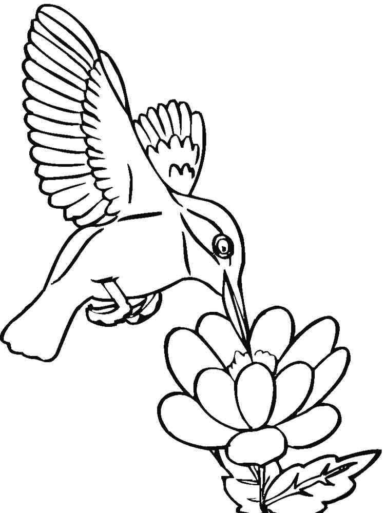 Adult Coloring Pages Hummingbirds