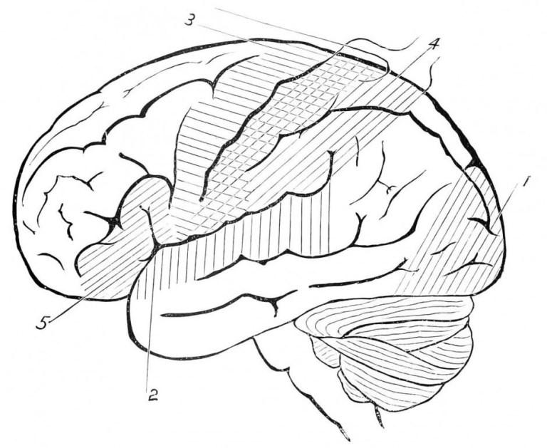 Brain Coloring Sheets
