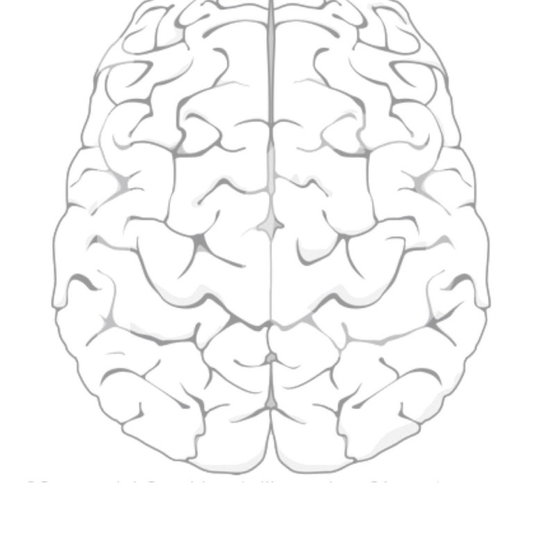 Brain Pictures To Color