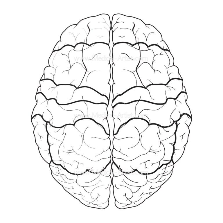 Brain Printable