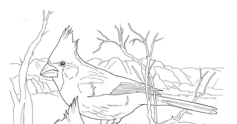 Cardinal Coloring Sheet