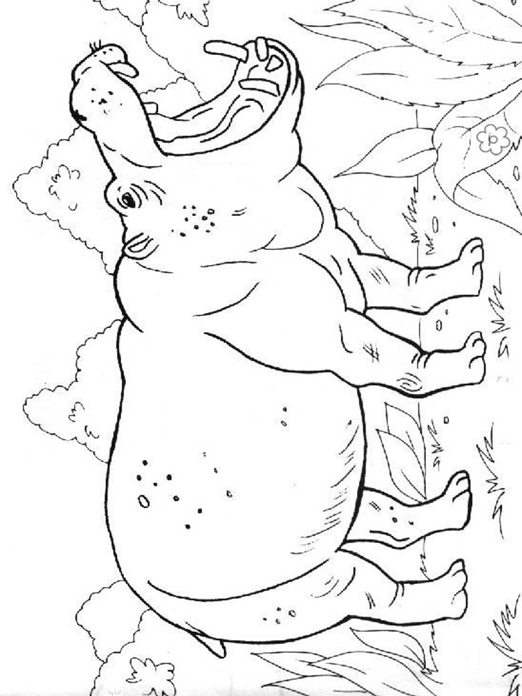Coloring Pages Hippo