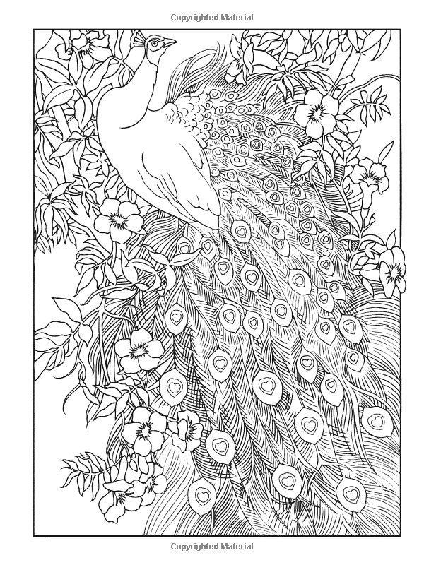 creative Peacock mandala