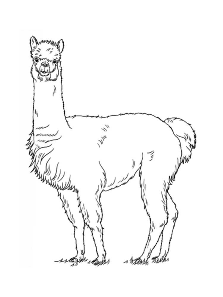Cute Llama Coloring Pages