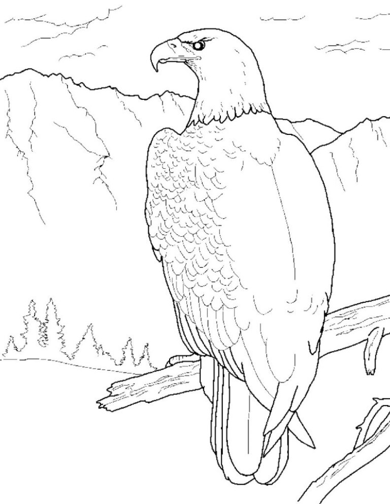 Eagles Coloring Pages