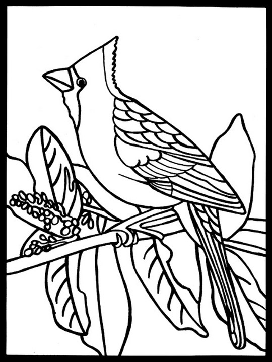 free Cardinal Color Pages