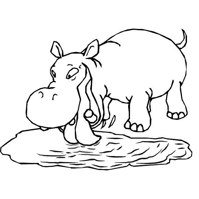 Hippopotamus Coloring Sheet