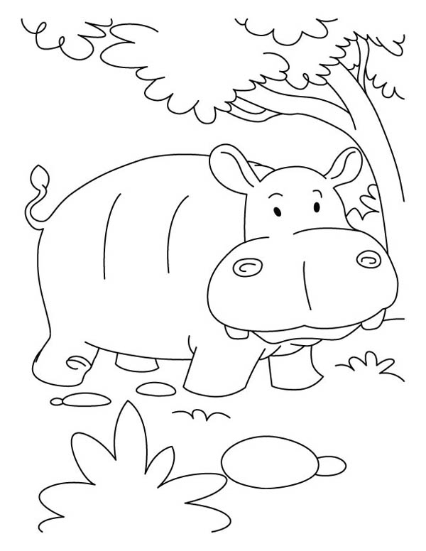 Hippopotamus Colouring Pages Books