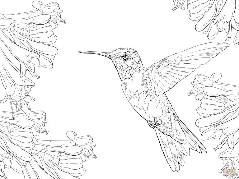 Hummingbird Color Sheets