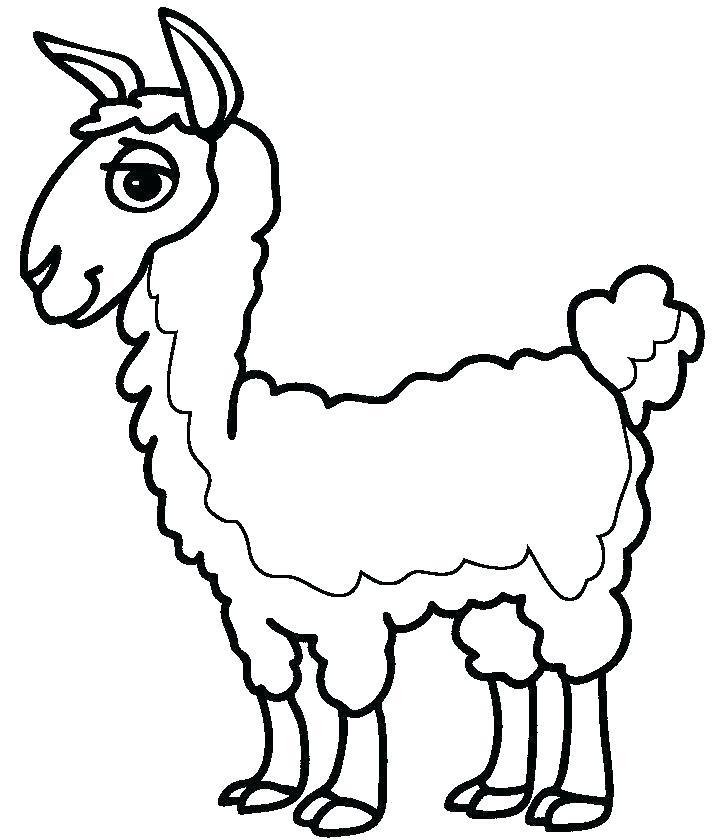 Llama Color Page