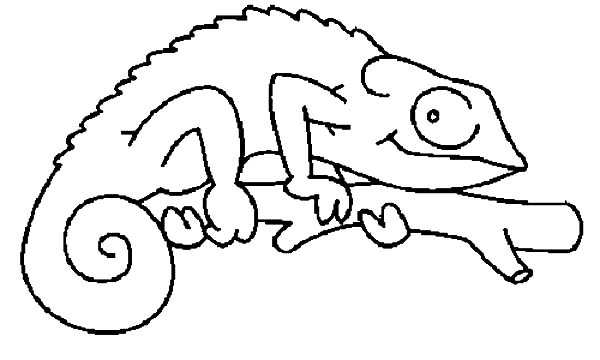 Mixed Up Chameleon Coloring Pages