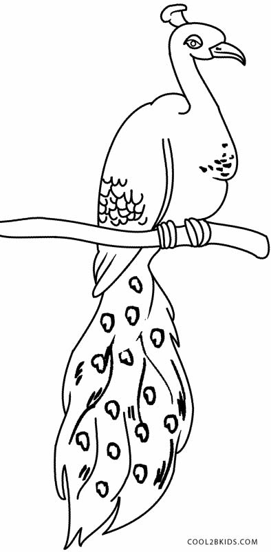Peacock Coloring Picture