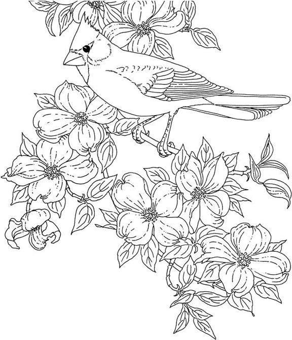 Printable Cardinal Bird