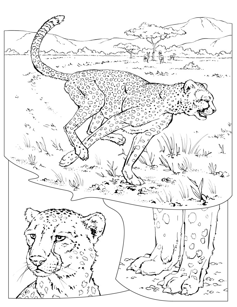 Printable Cheetah Coloring Pages