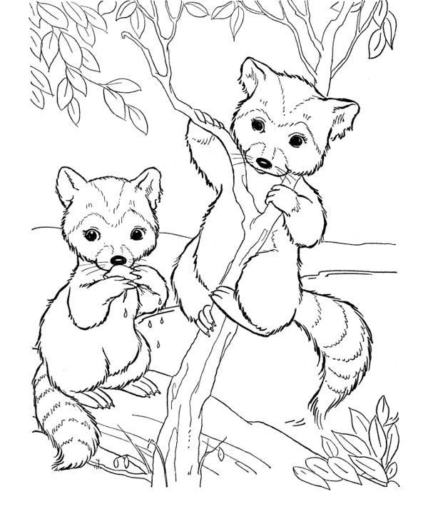 Raccoon Coloring Sheet