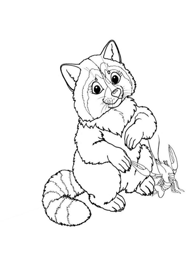 Raccoon Picture To Color