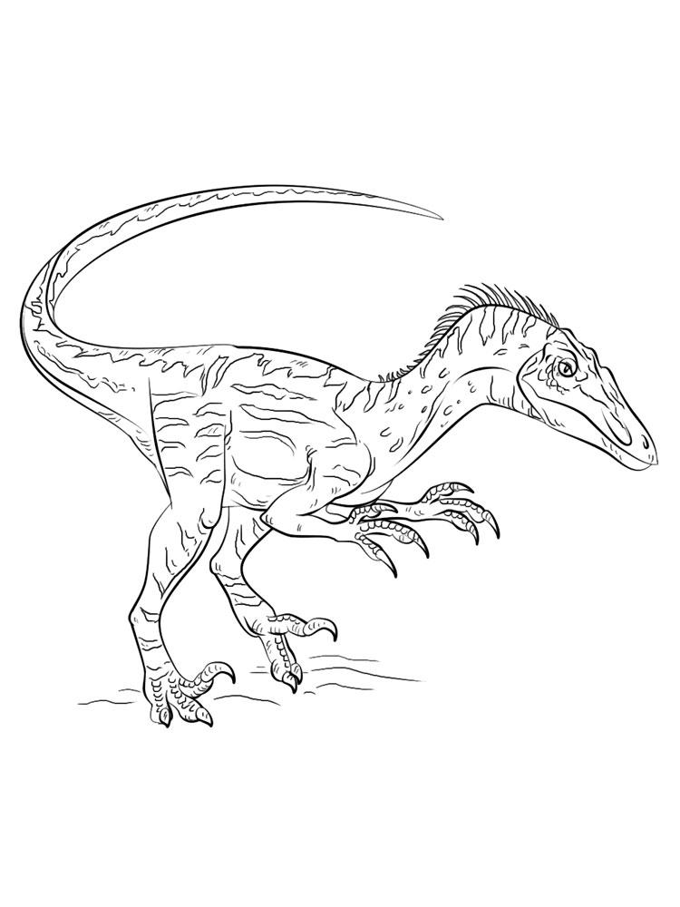 Raptors Coloring Pages