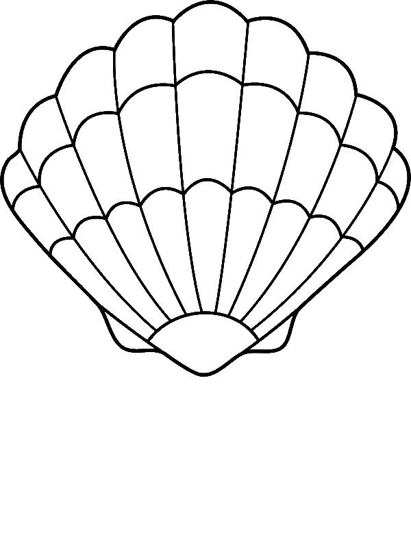Sea Shell Coloring Sheets