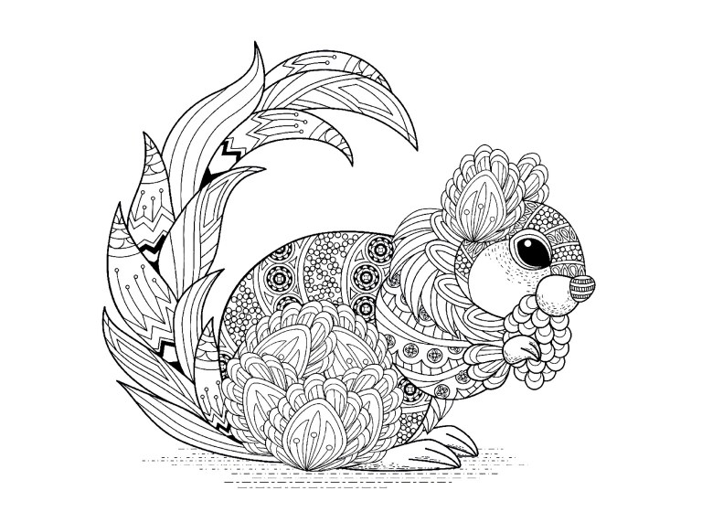 Squirrel Coloring Pages For Adults