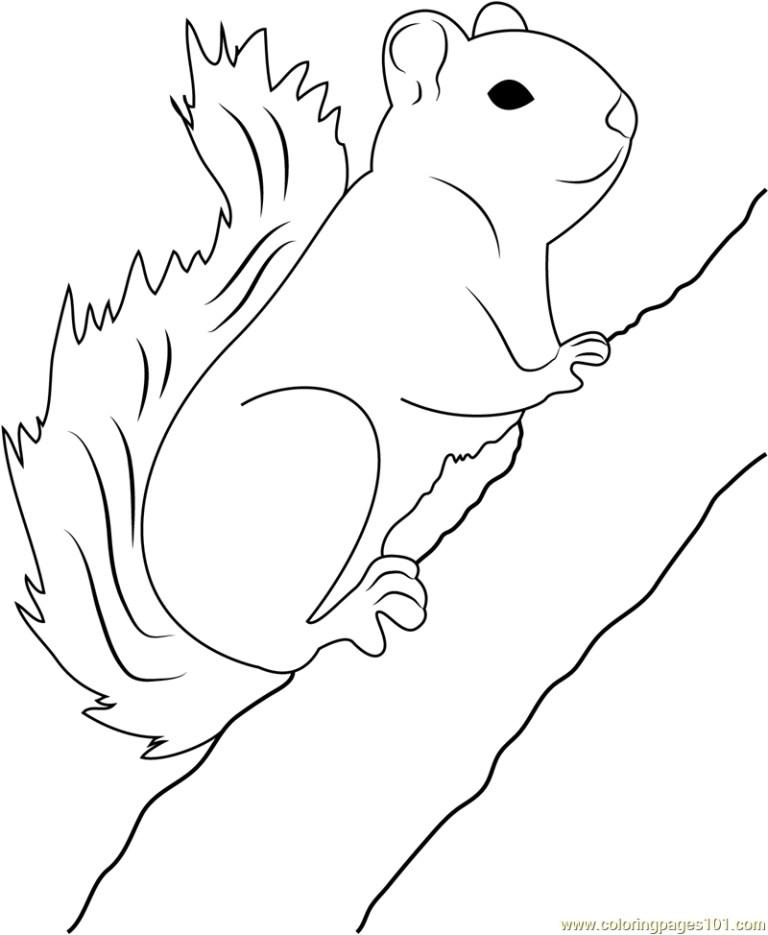 Squirrel Coloring