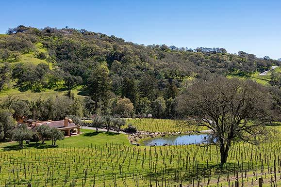 birdland vineyards