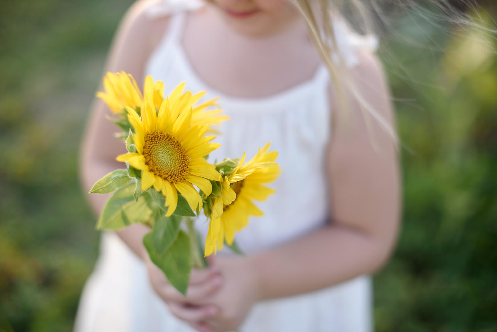 sunflowers girl toddler family photography summer