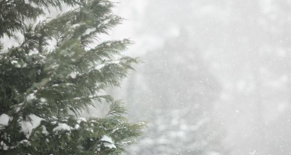 Snowy Cinemagraphs [Chesterfield RVA Virginia Photographer]