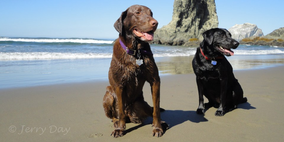 Happy pups on the beach.