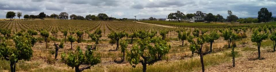 Vineyards at Castoro Winery, Paso Robles, California